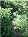 SZ0696 : Kinson: brambly, nettly undergrowth on footpath E12 by Chris Downer
