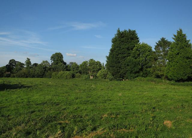 Field by Little Shelford
