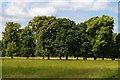 TQ2668 : Morden Hall Park by Christopher Hilton