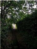SZ0895 : Redhill: footpath O24 goes darkly downhill by Chris Downer