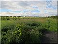 TL4056 : New woodland by Hugh Venables