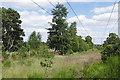 SU9666 : Power lines, Chobham Common by Alan Hunt