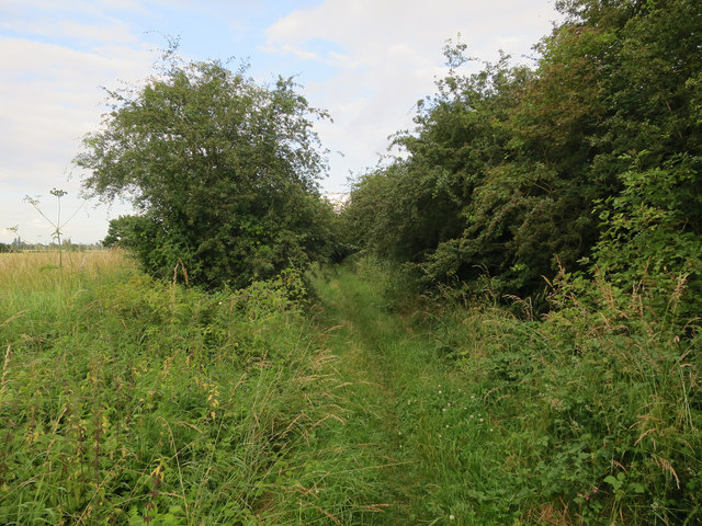 Overgrown byway