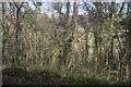 SX4369 : Hare Wood by N Chadwick