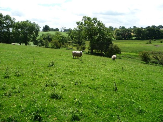Sheep pasture above [north of] Moresby Tarn