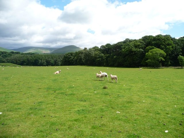 Sheep pasture north-west of Stank Wood