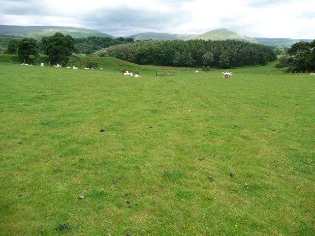 A Pennine Journey passing through sheep pasture