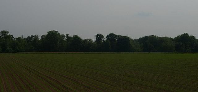 Field north of Albrighton