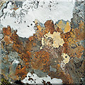NH2179 : Lichens beside the path to Bealach nam Bùthan by Julian Paren