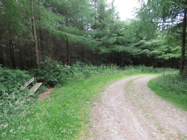 Forest track in The Forest of the Dunbrody
