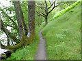 NN3307 : The West Highland Way below Ashlan by John Allan