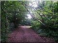 SZ0695 : East Howe: footpath E56 heads through the trees by Chris Downer