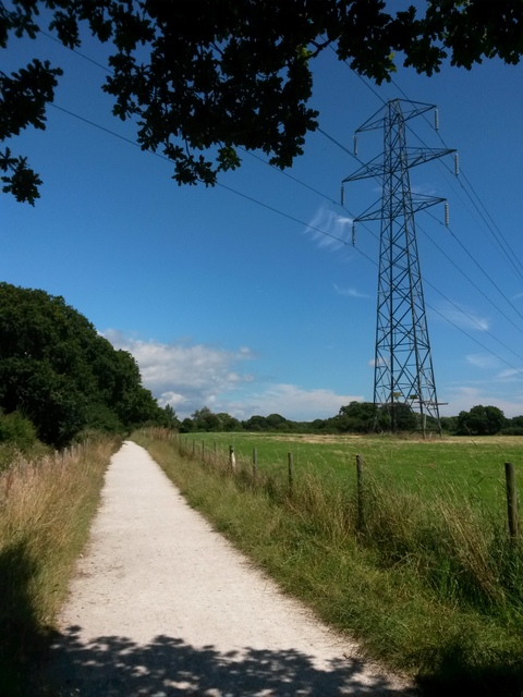 Throop: footpath M15 under a tree and power lines