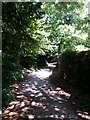 SZ0995 : Muscliff: dappled light on footpath M15 by Chris Downer