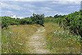 SZ7099 : Hayling Island scrubland by Alan Hunt