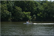 TQ1672 : View of a speedboat on the River Thames from the riverside path in Radnor Gardens #2 by Robert Lamb