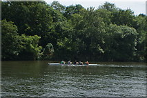 TQ1672 : View of a canoe on the River Thames from the riverside path in Radnor Gardens #3 by Robert Lamb