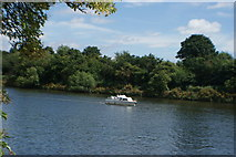 TQ1672 : View of a speedboat on the River Thames from the riverside path in Radnor Gardens #3 by Robert Lamb