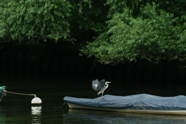 View of the heron flying onto the adjacent boat on the Thames