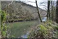 SX4371 : River Tamar by N Chadwick