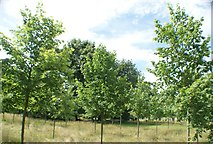 TQ1572 : View of trees in the grounds of Strawberry Hill House #2 by Robert Lamb
