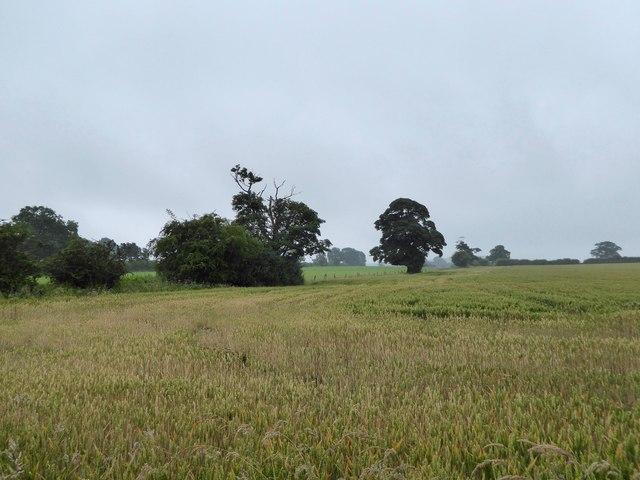 Butterton: field near church