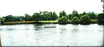 TQ1773 : View of a canoe on the Thames at Marble Hill Park by Robert Lamb