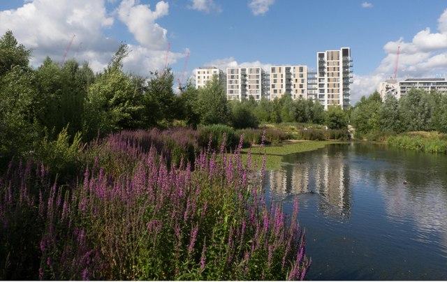 Waterglades wetlands, East Village, Queen Elizabeth Olympic Park