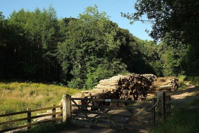 Log piles, Gunveor Plantation