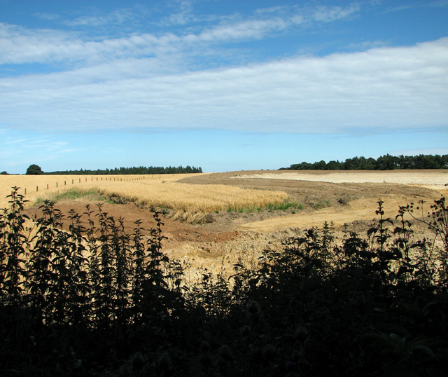 A ruined crop