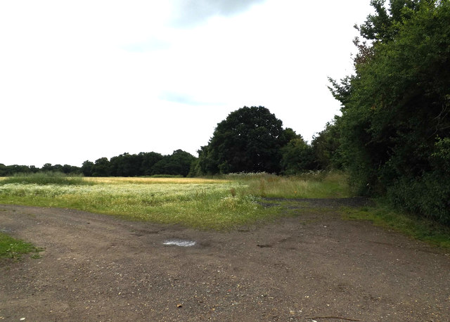 Field off Cromer Hyde Lane