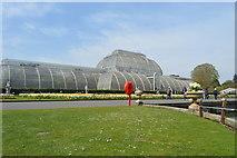 TQ1876 : Palm House by N Chadwick