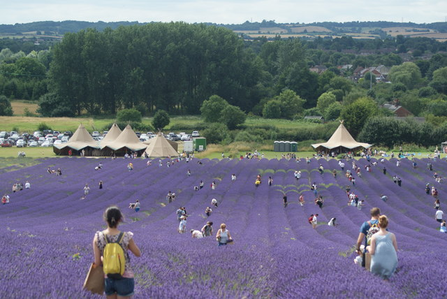 Image result for lavendeR HITCHIN