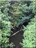 TL0654 : Ravensden Brook by Dave Thompson