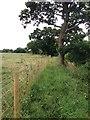 TL0654 : Alongside Ravensden Brook by Dave Thompson