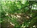 SE3742 : Dappled light, Hetchell Wood in summer by Christine Johnstone