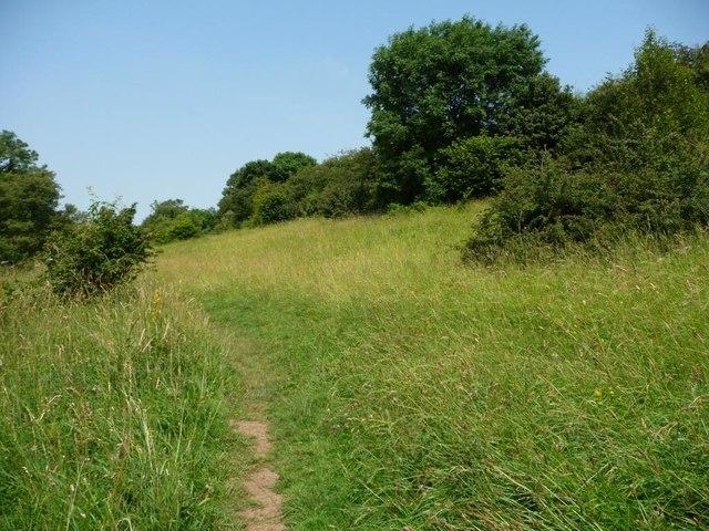 Limestone grassland in summer, Hetchell Wood