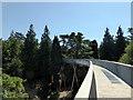 ST8589 : The Treetop Walkway at the National Arboretum, Westonbirt by PAUL FARMER