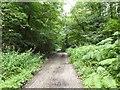 SJ8243 : Lymes Road by Jonathan Hutchins