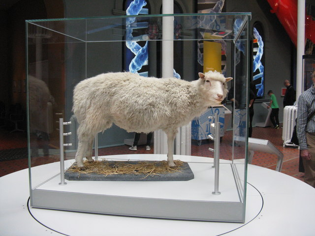 Dolly at the National Museum Scotland