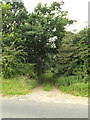 TM0080 : Fen Lane Footpath to the A1066 Thetford Road by Adrian Cable
