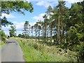 NU1114 : Plantation of Scots Pine near Woodhall Farm by Oliver Dixon