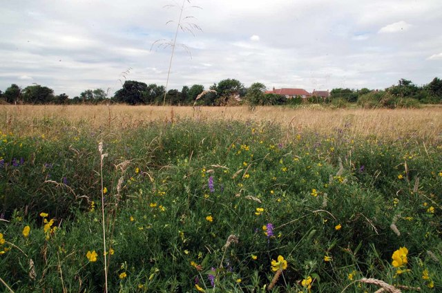 Thornwood Flood Meadow LNR