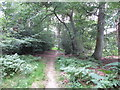 SU9486 : Permissive path waymark in Egypt Woods by David Hawgood