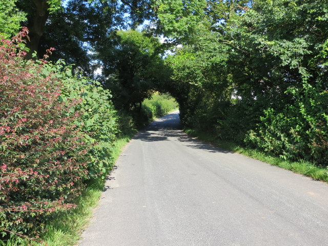 Hollow Lane at Bank Top