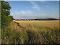 TL2955 : Wheat fields by Hugh Venables