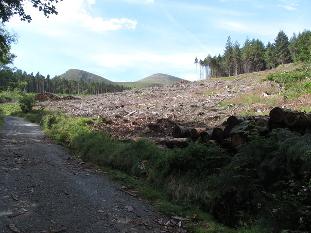 Cut over section of forest in Donard Wood