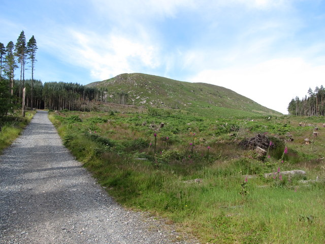 Ascending forest road in Donard Wood