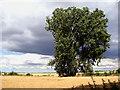TF7203 : Crop fields by Evelyn Simak