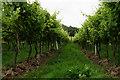 TQ1651 : Denbies Vineyard by Peter Trimming